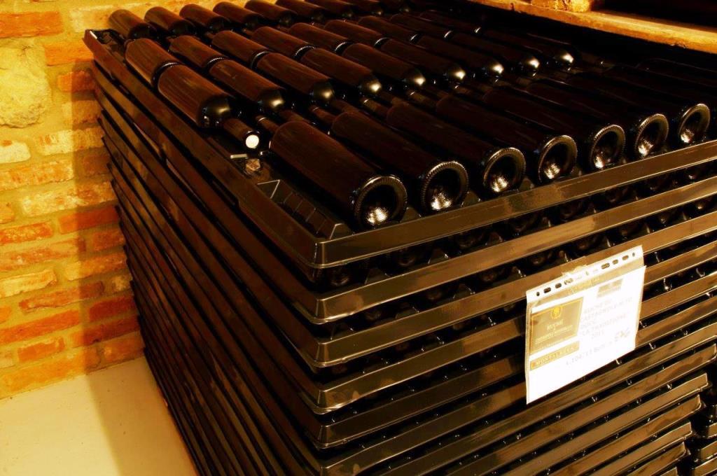 Vineplast3-1024x680